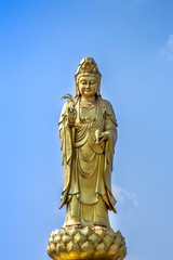 golden statue of the goddess of mercy  guanyin or guan yin standing on the lotus on blue sky background. buddhist and religion concept.