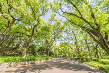 都会の新緑