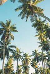 Wall Mural - Tropical palm trees on clear summer sky background. Toned image