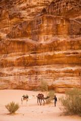 Bedouin with his camels in Wadi Rum desert.