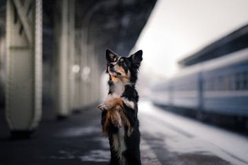 dog at the train station. Traveling with the pet, adventure