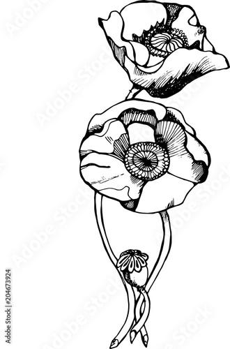 Illustration of a black and white poppy flower pattern poppy field illustration of a black and white poppy flower pattern poppy field mightylinksfo