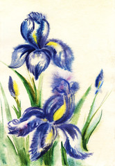 Watercolor drawing of two blue iris flowers in leaves with buds on a clear creamy background. Hand drawn on wet paper illustration.