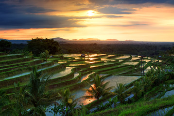 Garden Poster Rice fields Famous Jatiluwih Rice terraces on Bali during sunrise, Indonesia
