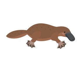 Cute platypus on white background.