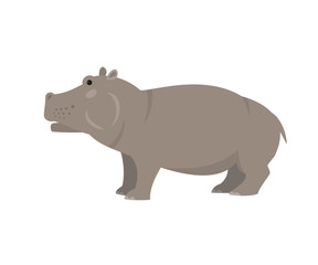 Cute hippo on white background.