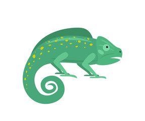 Cute chameleon on white background.