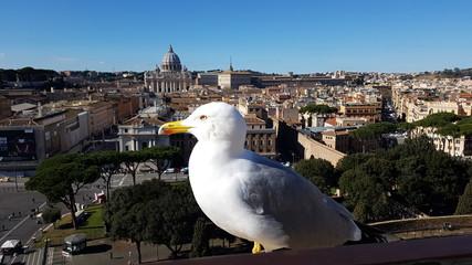 Via della Conciliazione; St. Peter`s Basilica; Saint Peter`s Square; bird; city; urban area; gull