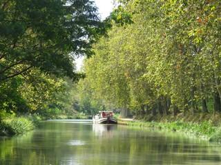 Péniche amarrée sur le Canal du Midi, bordé de platanes verdoyants, en été (France)