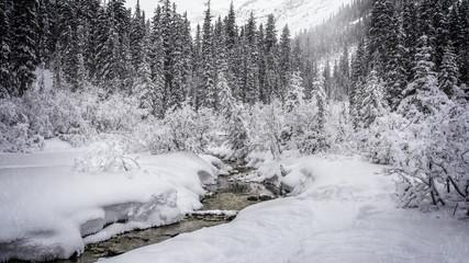 snowy scene in Banff National Park