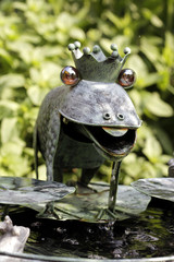 Partnersuche froschkönig Froschkönig in Kassel auf