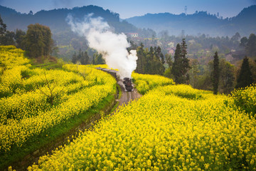 old steam train passing through a sea of rapeseed flowers