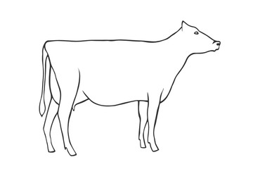 Hand Draw Cow