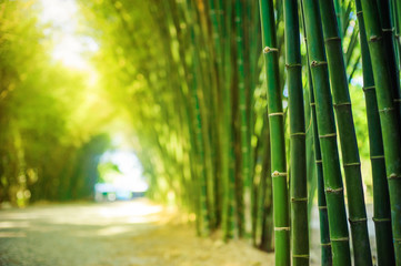 Deurstickers Bamboo bamboo forest with sunlight