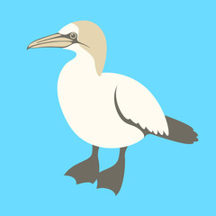bird gannet vector illustration flat style profile