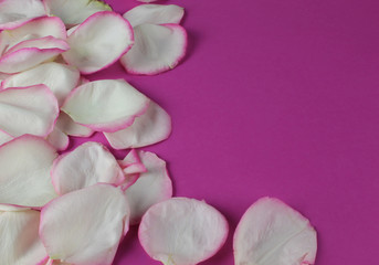 Rosenblätter auf rosa Hintergrund