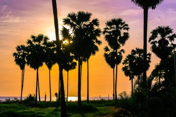 Sugar palm trees on colorful sun set