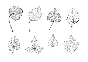 Set of black and white vintage silhouettes of tree leaves. Detailed hand drawn design elements. Natural monochrome  illustration isolated on white background