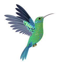 Beautiful flying hummingbird. Design element. For banners, posters, leaflets and brochures.