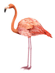 Beautiful pink flamingo standing. Design element. For banners, posters, leaflets and brochures.