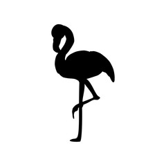 Flamingo bird illustration silhouette