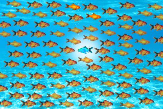 Be confident, swim against the current concept with small fishes on blue water texture or background