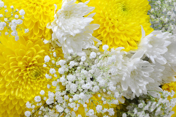 Close up of a flower bouquet filled with white pompom daisies and yellow chrysanthemums with delicate baby's breath added. Useful for celebrations  including weddings, mother's day or birthdays