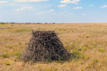 Steppe eagle sits in nest ion ground