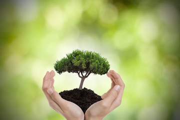 tree in the hands, environmen and nature protection