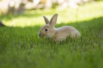 Little rabbit running on the field