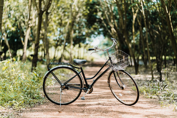 old vintage bicycle with forest background