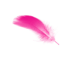 Beautiful pink magenta feather isolated on white background