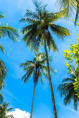 Green palm tree against blue sky. Summer vacation background.