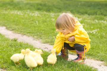 a little girl feeds the ducks. girl in yellow raincoat and rubber boots. little girl with ducklings