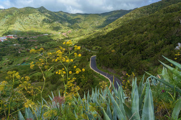 Hilly Landscape with winding road and yellow flowers