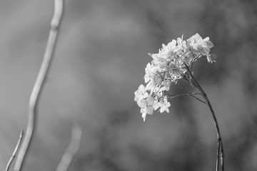 Black and white dry bush against the sky close-up