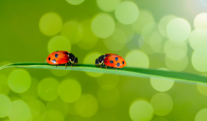 ladybug on green branches in the jungle