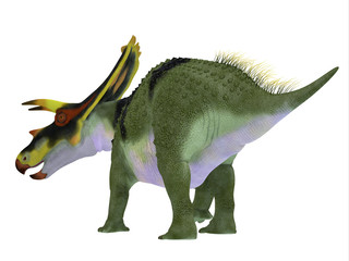 Anchiceratops Dinosaur Tail - Anchiceratops ornatus was a herbivorous Ceratopsian dinosaur that lived in Alberta, Canada in the Cretaceous Period.