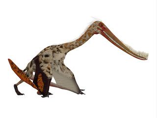 Pterodaustro Reptile on White - Pterodaustro guinazui was a carnivorous flying reptile that lived in South America during the Cretaceous Period.