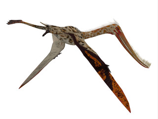 Pterodaustro Reptile Tail - Pterodaustro guinazui was a carnivorous flying reptile that lived in South America during the Cretaceous Period.