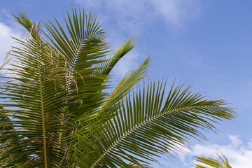 Coco palm leaf banner template with text space. Sunny day on tropical island. Exotic holiday