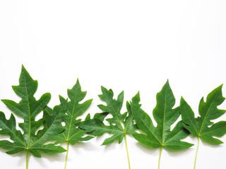 Close up green papaya leaves tree