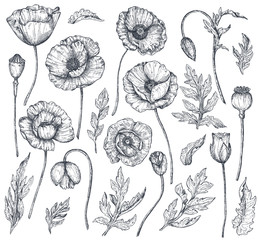 Vector collection of hand drawn poppy flowers