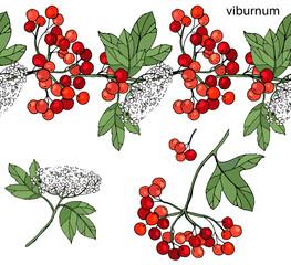 Endless horizontal border with ripe berries. Viburnum isolated on white