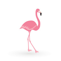 Pink flamingo . Vector illustration .Isolated on white background. Bird illustration design on background.
