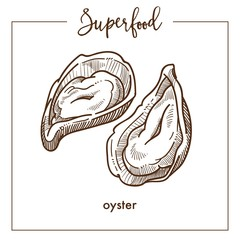 Delicious natural oyster in shell monochrome superfood sepia sketch