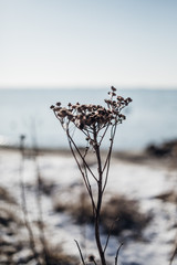 Winter mood on a Danish beach