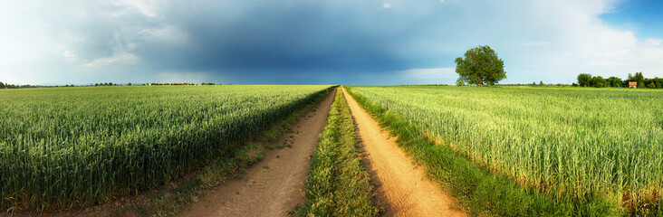 Wall Mural - Road between green wheat field with storm and tree, Panorama