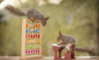 red squirrels in a school class outside
