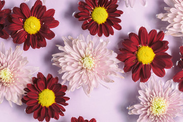 Floral pink and red flower background, flat lay.